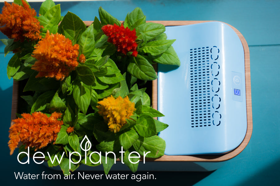 Dewplanter vs. Self Watering Planters