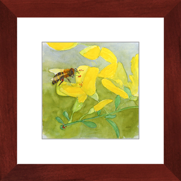 "Framed Art Print - ""Honeybee on Scotch Broom"""
