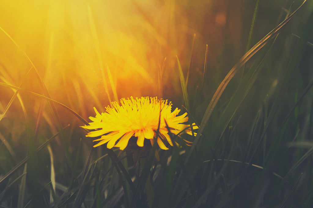 Spiritual Poetry That Heals: 10 Short Poems to Spark