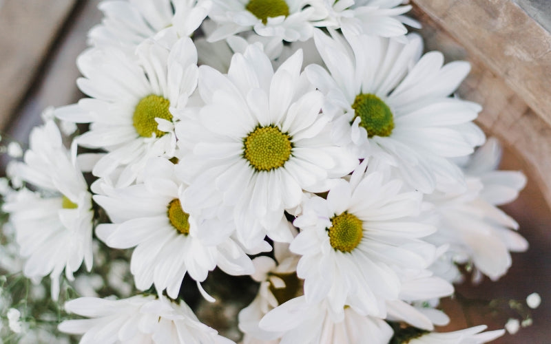 21 Spiritual Quotes to Help You Celebrate Being Alive