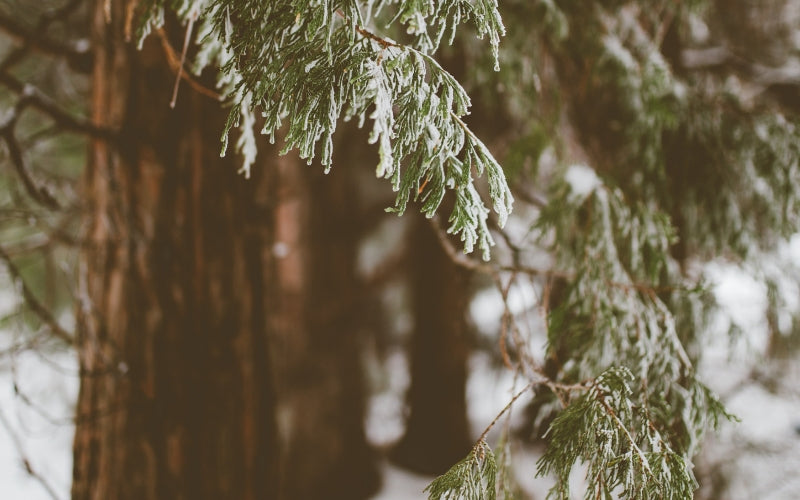 10 Winter Affirmations for Emotional Healing