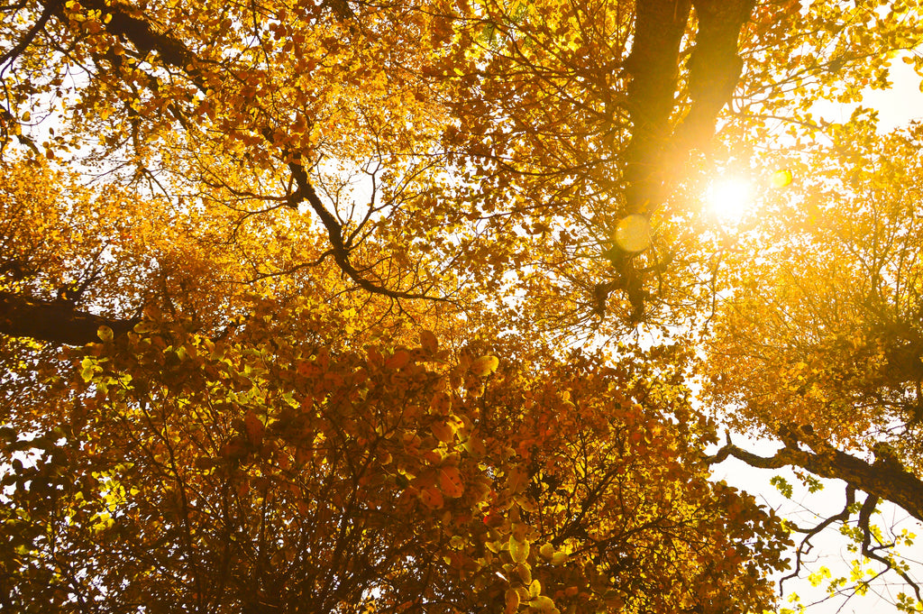 15 Literary Quotes about Autumn: An Ode to This Season's Grace