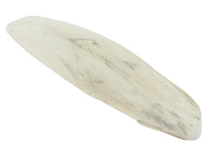 Johnston and Jeff Cuttlefish Bone 6-8