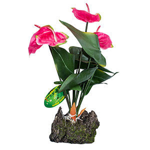 LR Anthurium Pink 50cm IF-32 - Creepy Critters