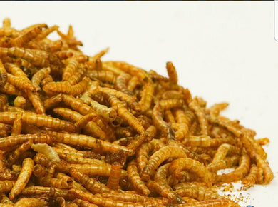 Dried mealworms - Creepy Critters