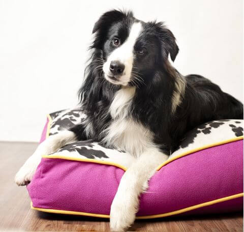 Frankie Dog Beds - Dog Beds For You