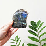 Labradorite Specimen - One Side Polished