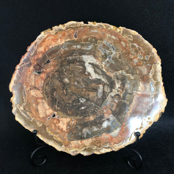 Petrified Wood Slice Large (2.1kg)