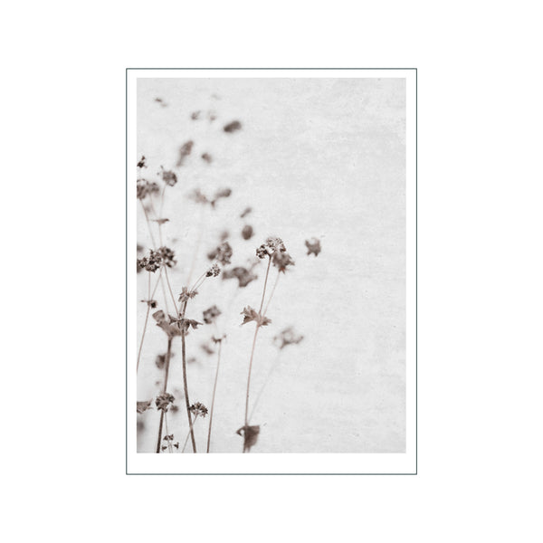Dried Flower 3