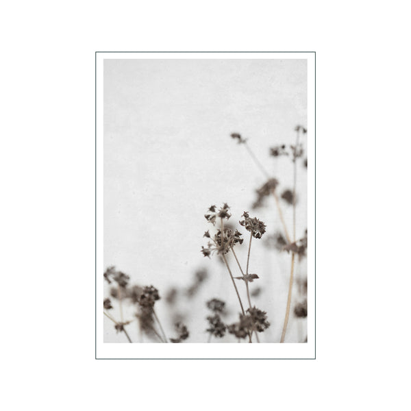 Dried Flower 4