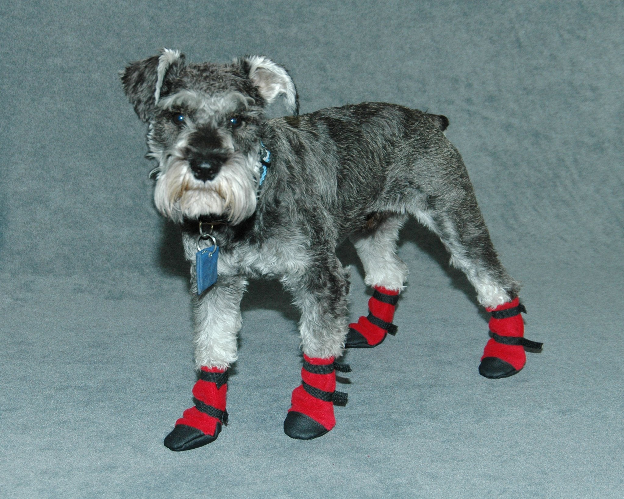 Paw-fect Winter Dog Boots - Size 00 Red