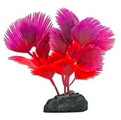 Betta Foreground Plant Fan Palm Red