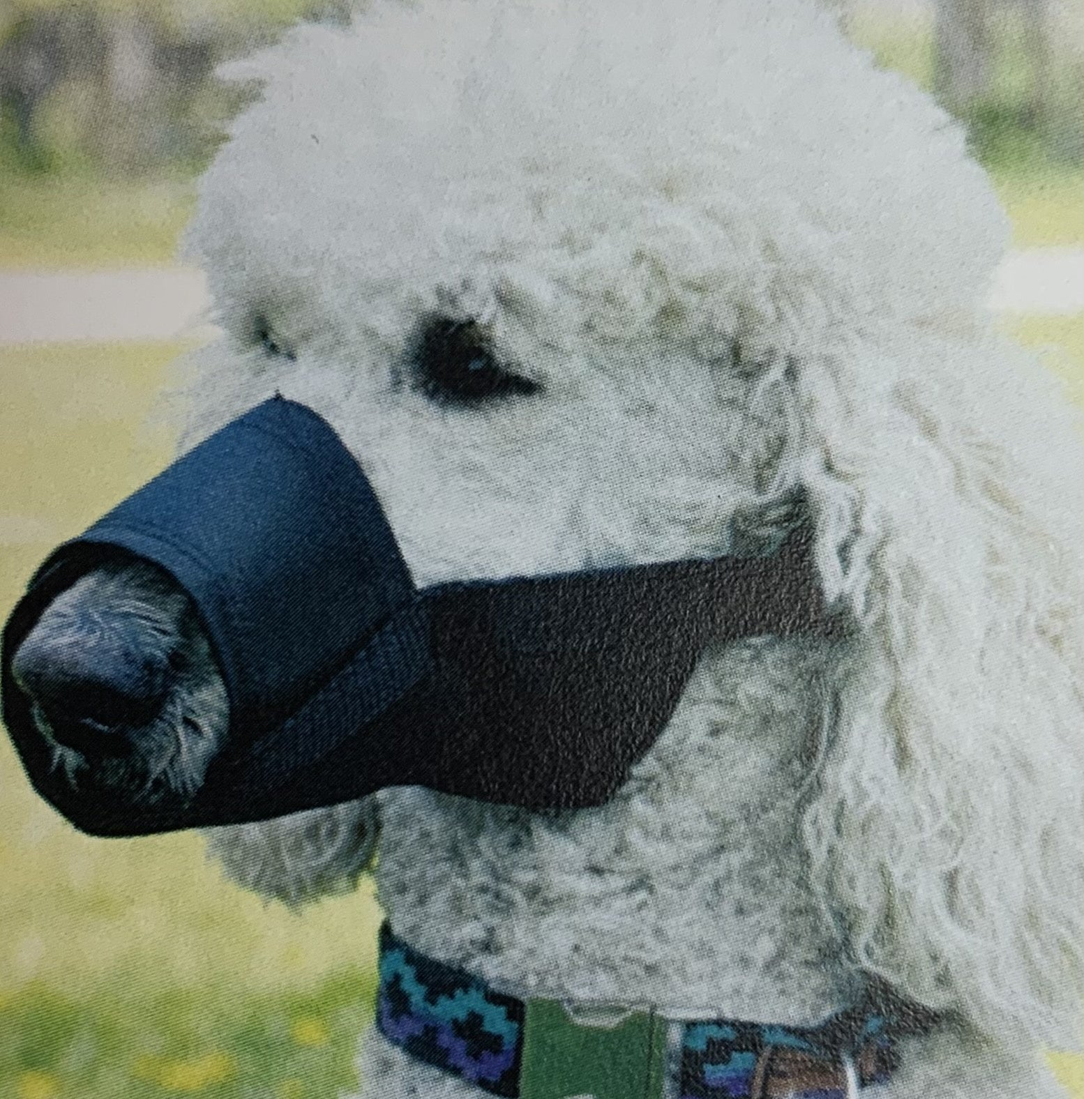 Medium Adjustable Dog Muzzle
