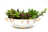 Succulent and Cacti Antique tray
