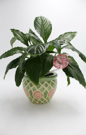 Peace Lily In a Green floral Pot