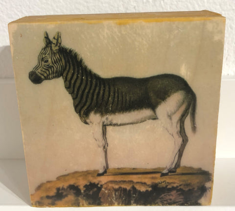 Zebra, Extinct