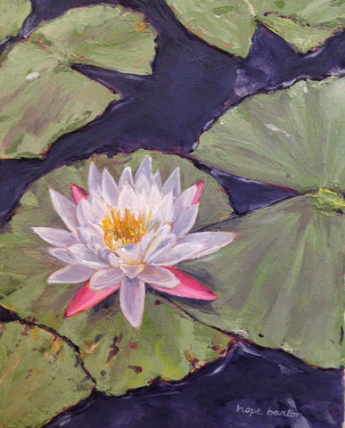 Water Lilly No.2
