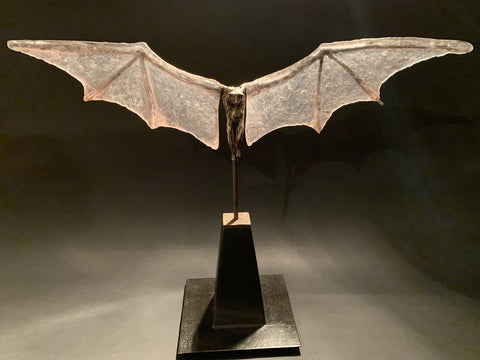 Bat with Clear Glass Wings