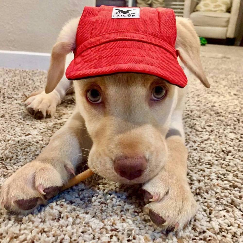 Puppy Hats | BUY 1, GET 2 FREE
