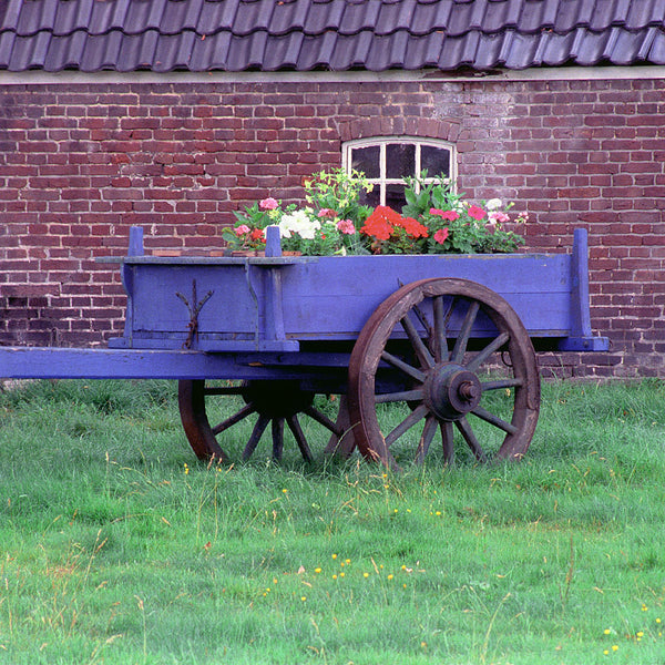 Blue Wagon- The Netherlands