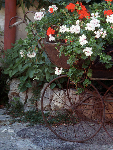 Flower Carriage- St. Paul de Vence(Provence), France
