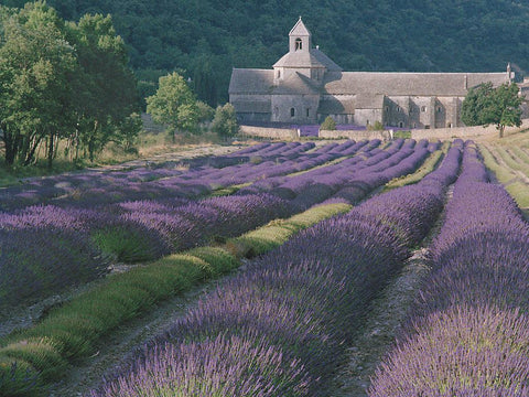 Lavender and Abbey- Senanque(Provence), France