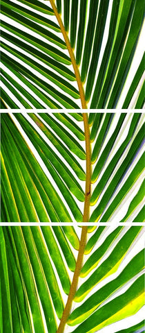 Palm Trilogy- Troncones(Guerrero), Mexico