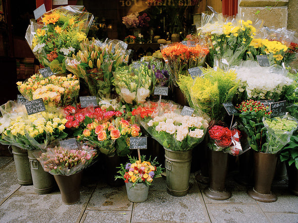 Paris Bouquet- Paris(Ile St Louis) France