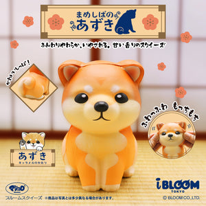 "Shiba Inu Squishy, ""Azuki,"" sitting up and having his cheeks squished"