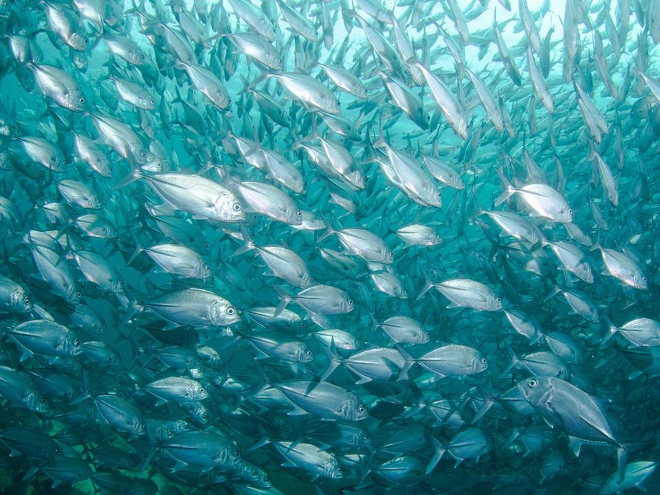 Should You Stop Eating Seafood To Help Protect The Oceans?