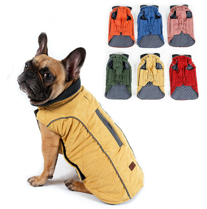 What to Look for When Buying a Dog Coat
