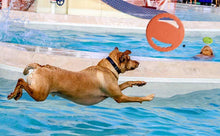 Load image into Gallery viewer, Flying Disc Interactive Rubber Dog Toys - puppyzone.co