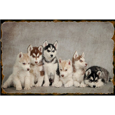 Puppy Shabby Chic Metal Poster Wall Plaques Dog Vintage Metal Tin Sign Art Bar Pub Iron Painting Posters Wall Decor