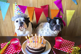 13 Great Steps To Have The Best Birthday Party For Your Dog