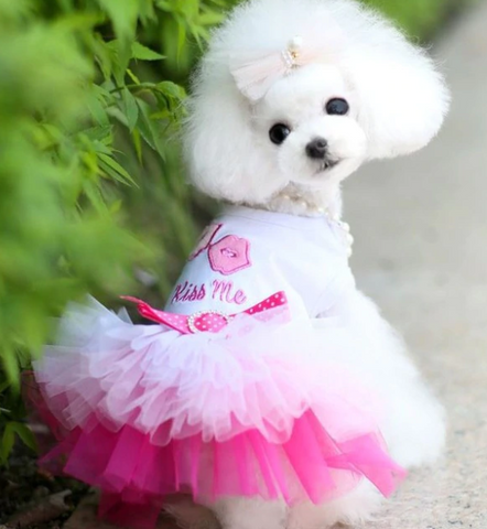 Dogs Dress Spring Summer Puppy Small Dog Lace Princess - stanomy