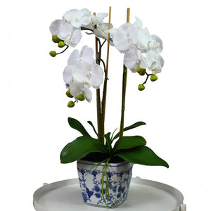 Orchid in Blue & White Square Pot 60cm