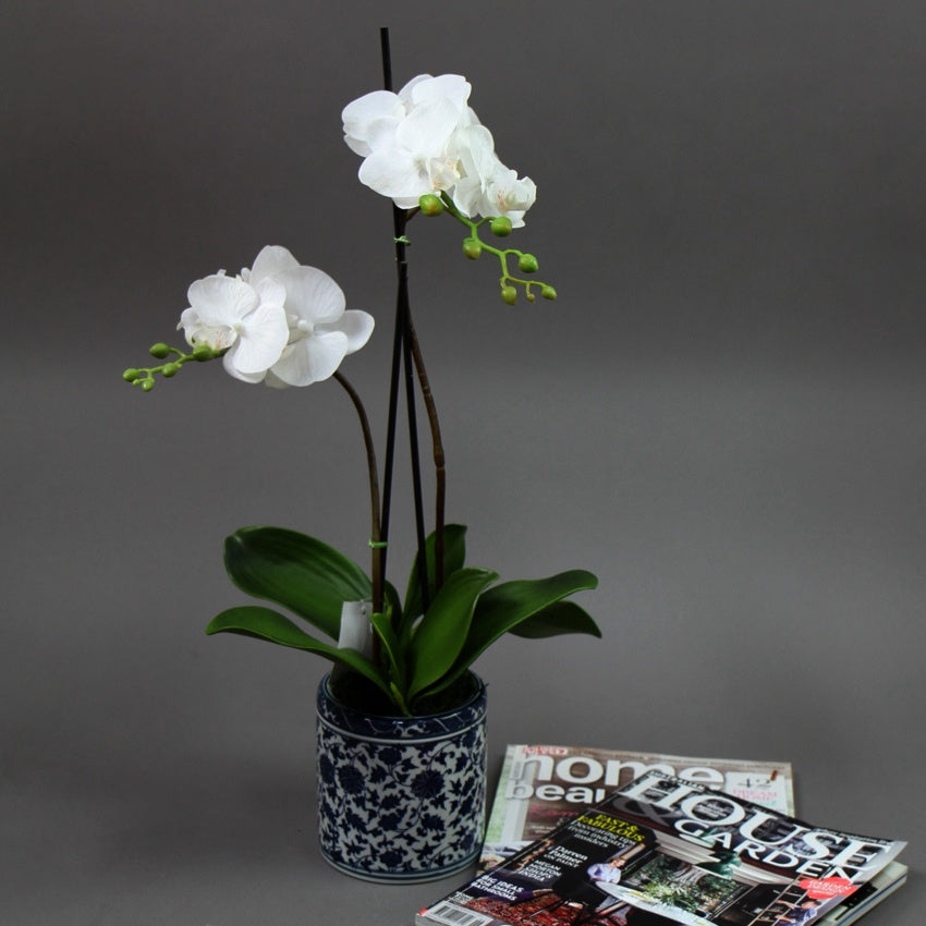 Orchid in Blue & White Round Pot 55cm