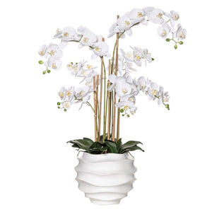 Orchid in White Ripple Pot