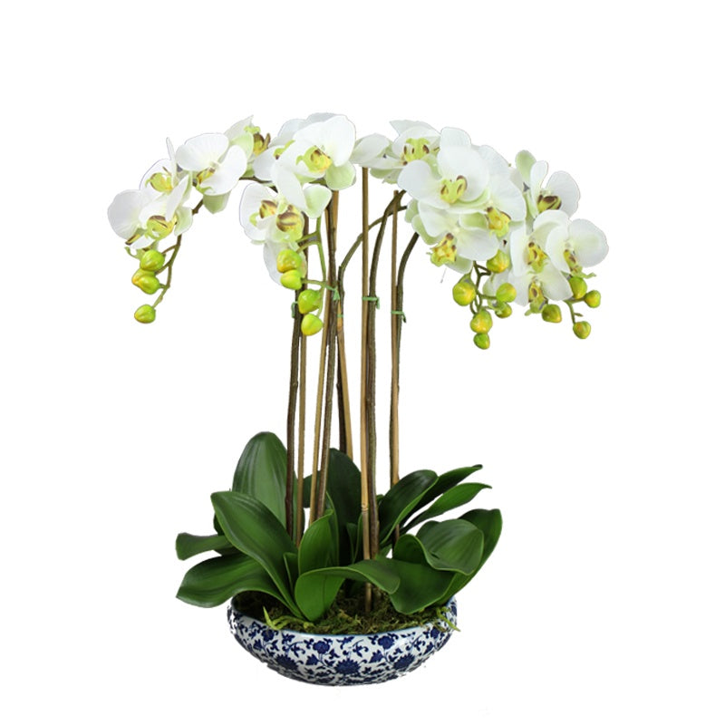 Orchid in Blue & White Wide Round Pot 55cm