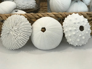 White Sea Urchin Set of 3