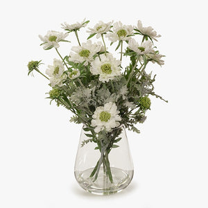 Scabiosa Mix in Vase