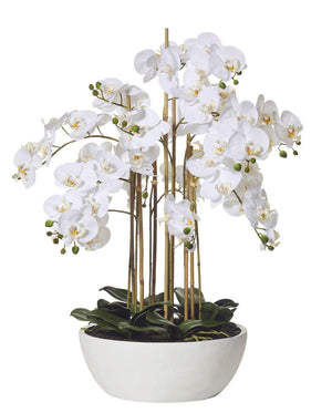 Butterfly Orchid White Round Pot 83cm