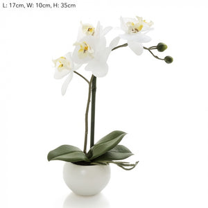 Orchid in White Pot 35cm