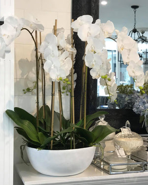 75cm Orchid in White Pot 7 Stems