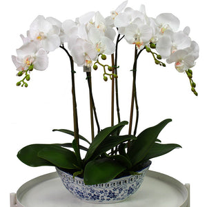 Orchid in Blue & White Oval Pot 52cm