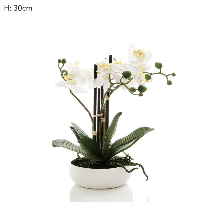 Orchid in White Bowl 30cm