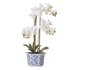 Butterfly Orchid - Chinoiserie Pot 60cm