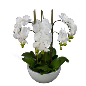 55cm Orchid in White Pot