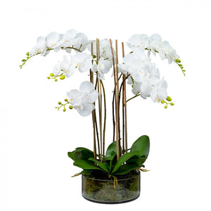 66cm Orchid in Glass Vase