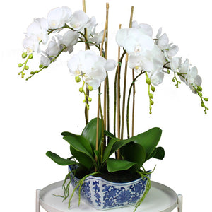 Orchid in Blue & White Rnd Sq Pot 66cm